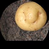 Marspasta